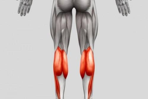 Der Zwillingswadenmuskel